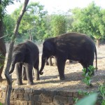Arignar Anna Zoological Park - Vandalur Zoo