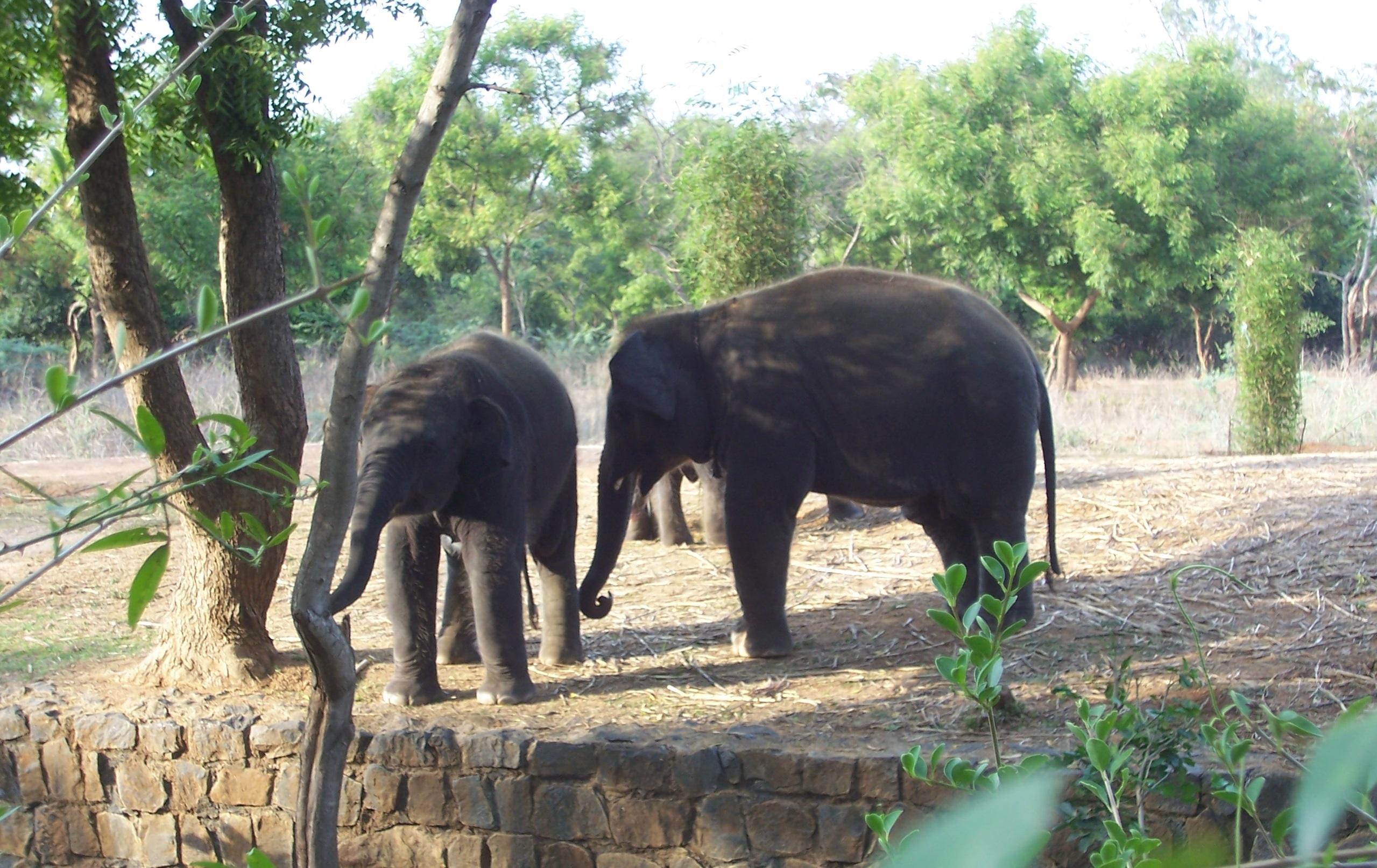 Arignar Anna Zoological Park Vandalur Zoo