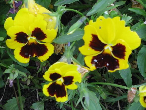 Pancy Flowers Melindajanice Com Craft Works School