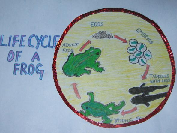 Frog's Life Cycle