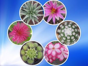 Cactus and Succulents Sale in Chennai