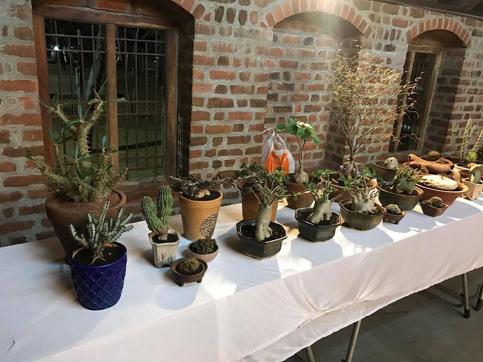 Cactus & Succulents Show in Chennai – 2019 | MelindaJanice Com
